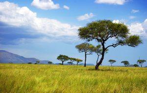 My Time in Kenya
